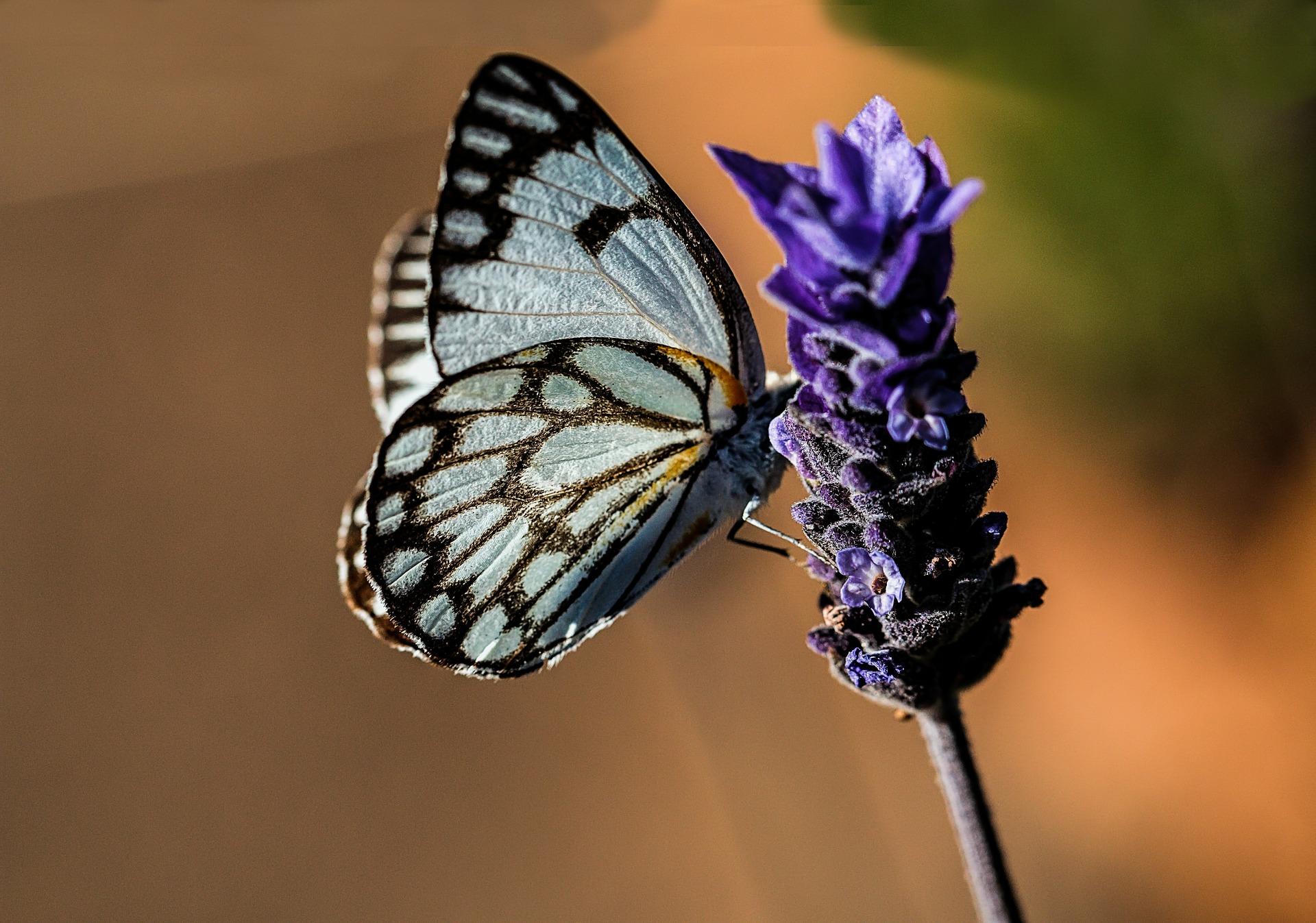 butterfly-374087_1920